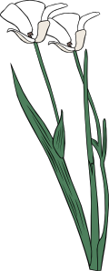 free vector Plant Shrub Flowers Outline clip art
