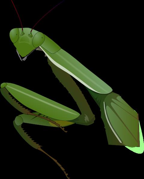 free vector Praying Mantis clip art