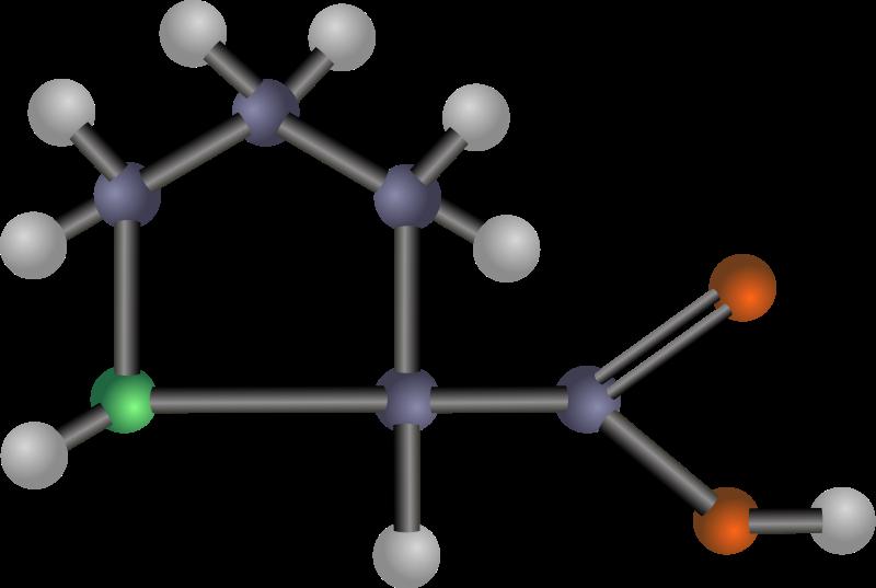 free vector Proline (amino acid)