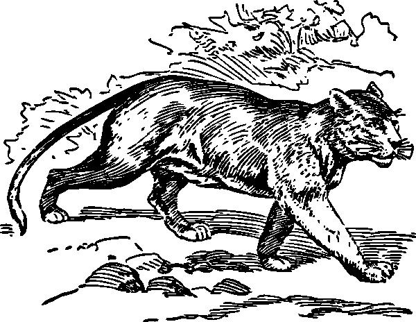 free vector Puma clip art
