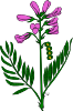 free vector Purple Flower clip art