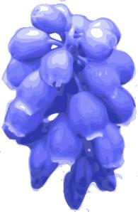 free vector Purple Flowers  clip art