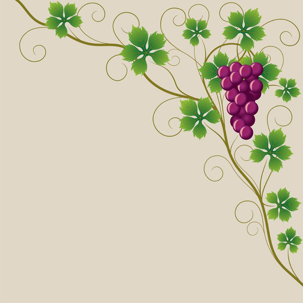 free vector Purple grapes and grape leaves vector