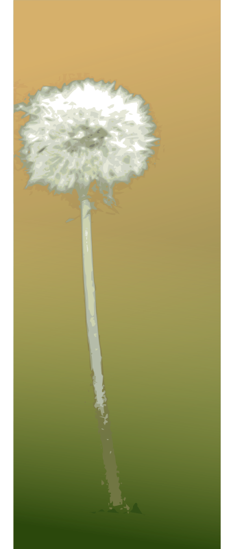 free vector Pusteblume - dandelion clock