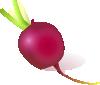 free vector Raddish clip art
