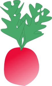 free vector Radish clip art