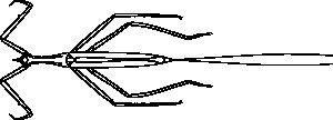 free vector Ranatra Chinensis clip art