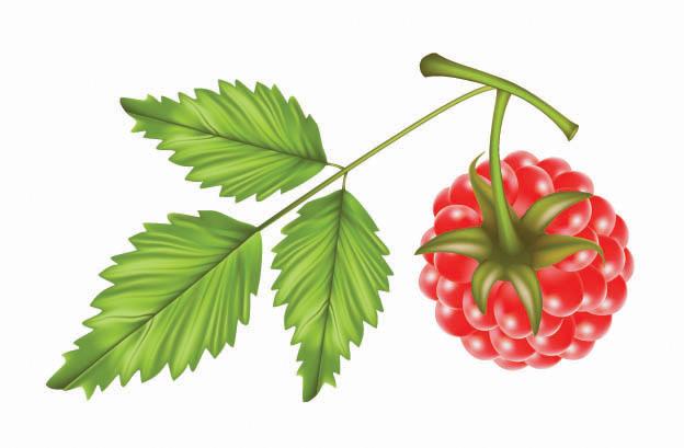 free vector Raspberry vector