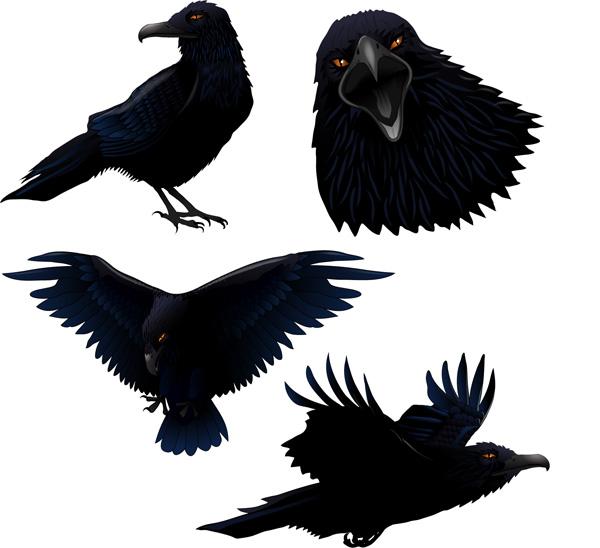 free vector Raven vector