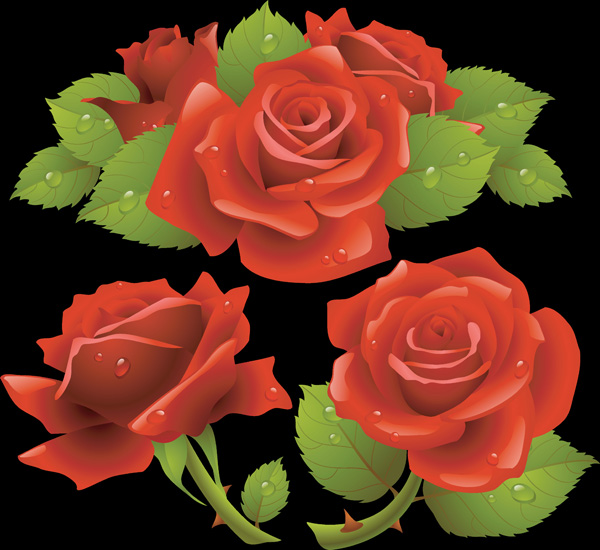 free vector Realisitic Vector Roses