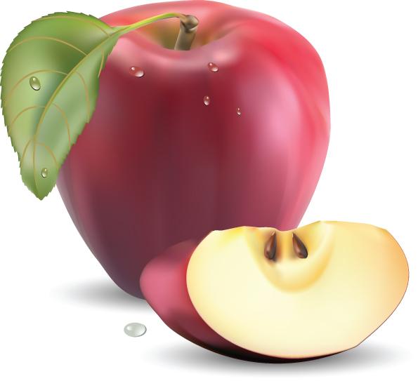 free vector Realistic fruit 05 vector