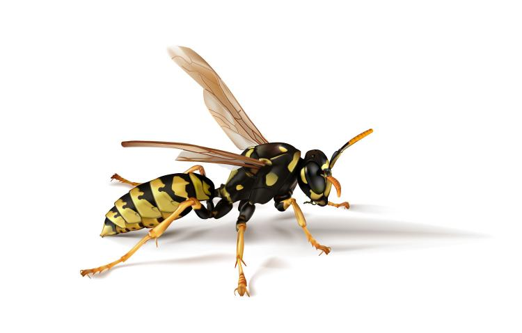 free vector Realistic insect 01 vector