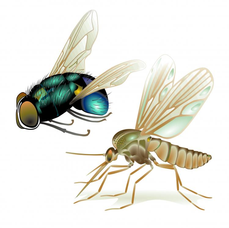 free vector Realistic insect 05 vector
