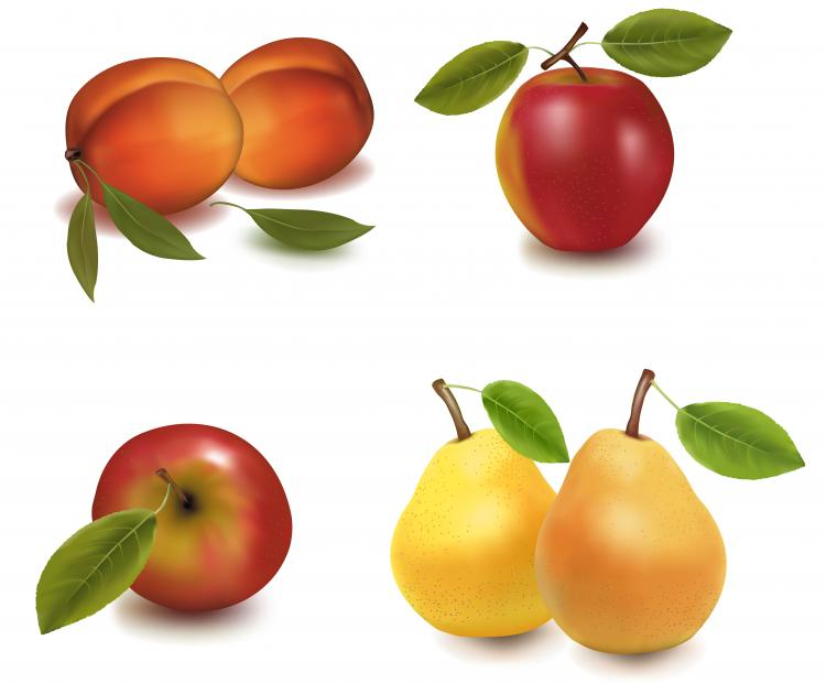 free vector Realistic vector fruits
