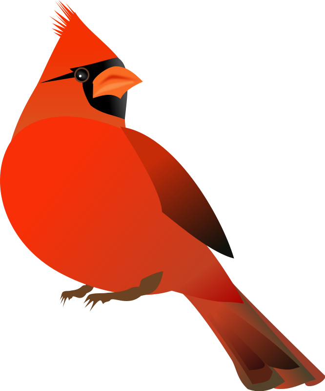 free vector Red Cardinal