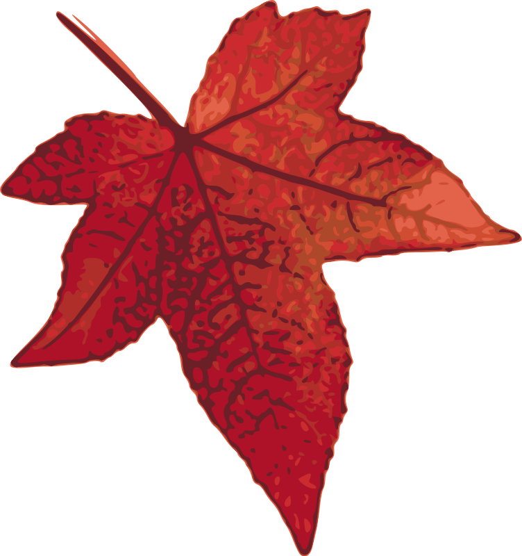 free vector Red maple leaf