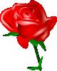 free vector Redrose clip art