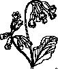 free vector Rose Outline clip art