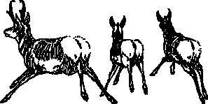 free vector Running Antelope clip art
