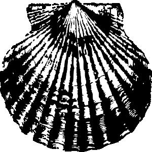 free vector Scallop Shell clip art 118843