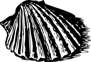 free vector Scallop Shell clip art