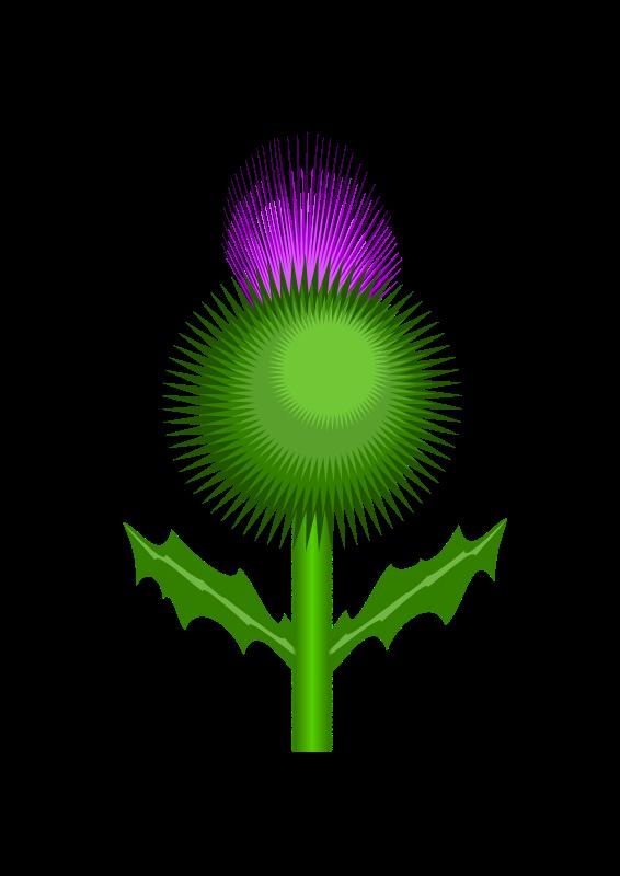 free vector Scottish Thistle
