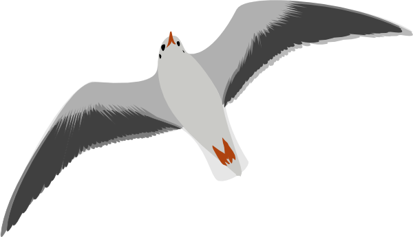 free vector Sea Gull Seagull clip art