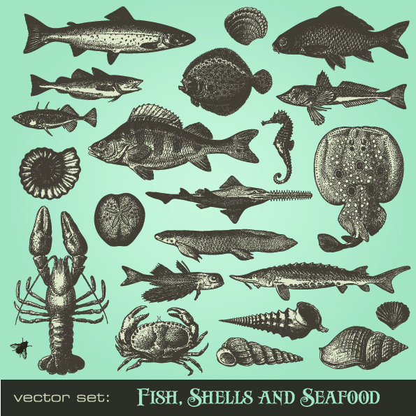 free vector Seafood animals vector