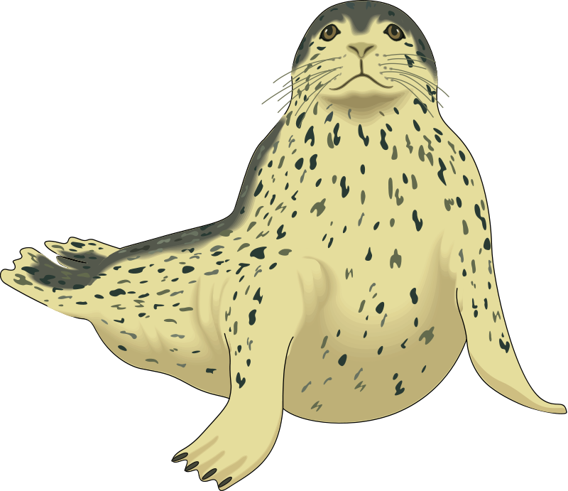 free vector Seal
