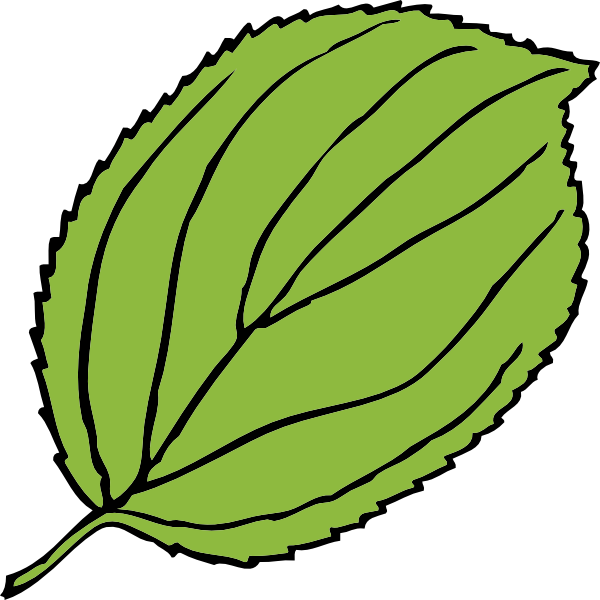 free vector Serrate Leaf clip art