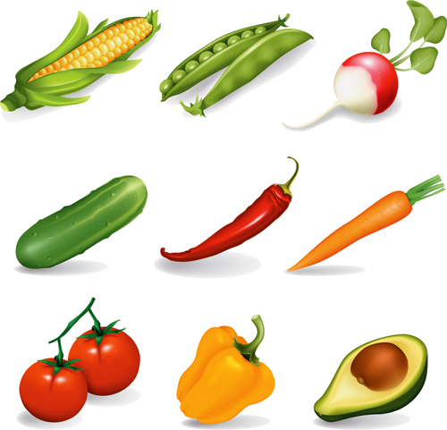 free vector Several Common Vegetables Vector Material Several