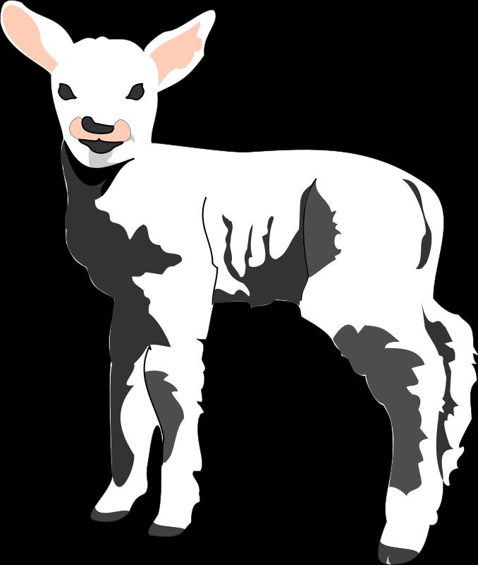 free vector Sheep 3