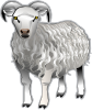 free vector Sheep Md V clip art