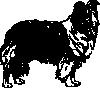 free vector Shetland Sheepdog clip art