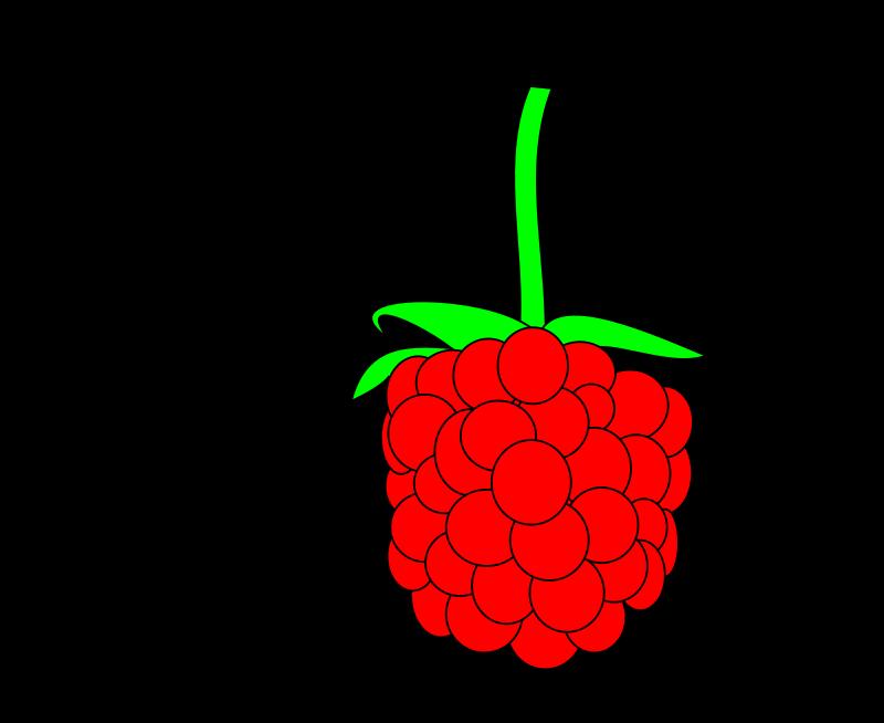 free vector Simple raspberry