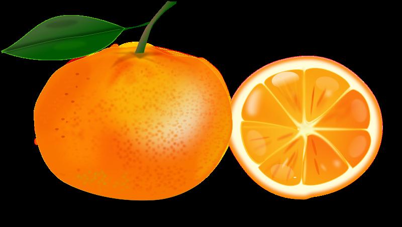 free vector Slice of an orange