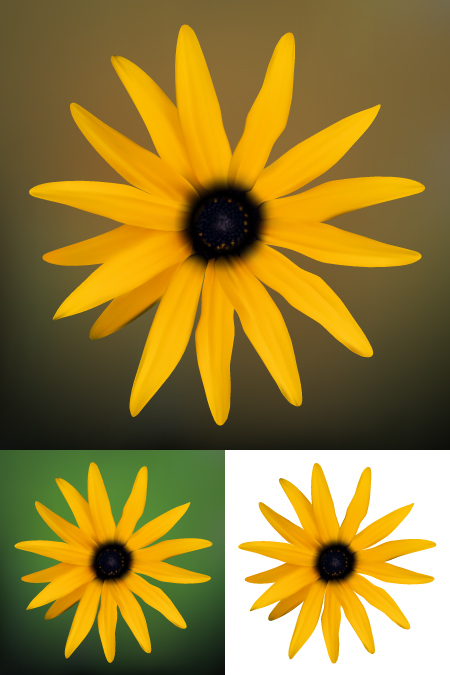 free vector Small chrysanthemum vector