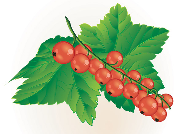free vector Small red berries clip art