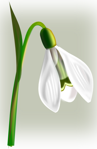 free vector Snow Drop clip art