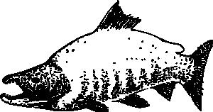 free vector Sockeye Salmon clip art