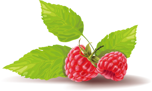 free vector Some red fruits vector