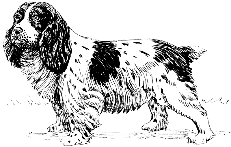 free vector Spaniel 2