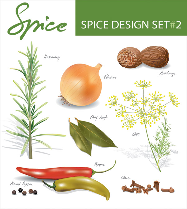 free vector Spices vector