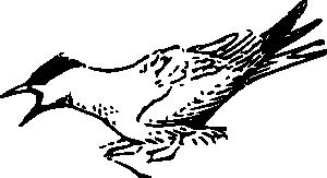 free vector Squeeking Bird clip art