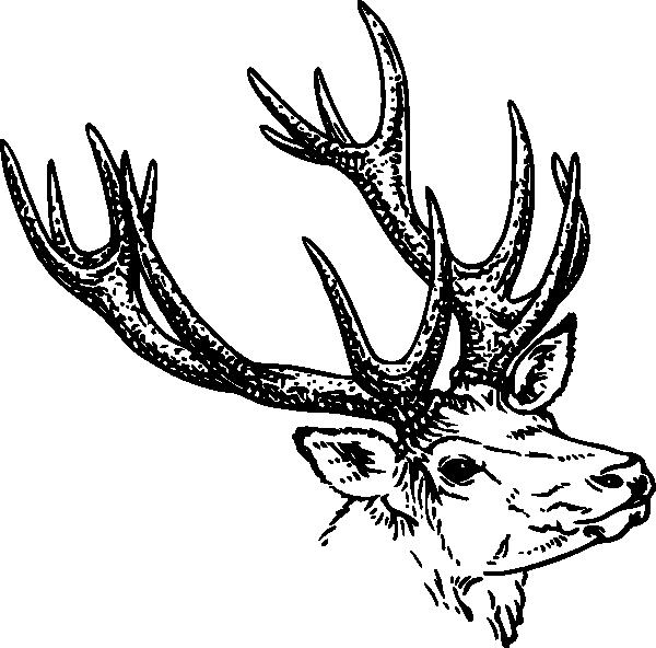 free vector Stag Head clip art