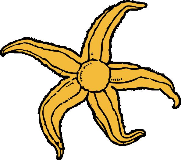 free-vector-starfish-clip-art_118813_Starfish_clip_art_hight.png