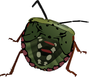 free vector Stink Bug clip art
