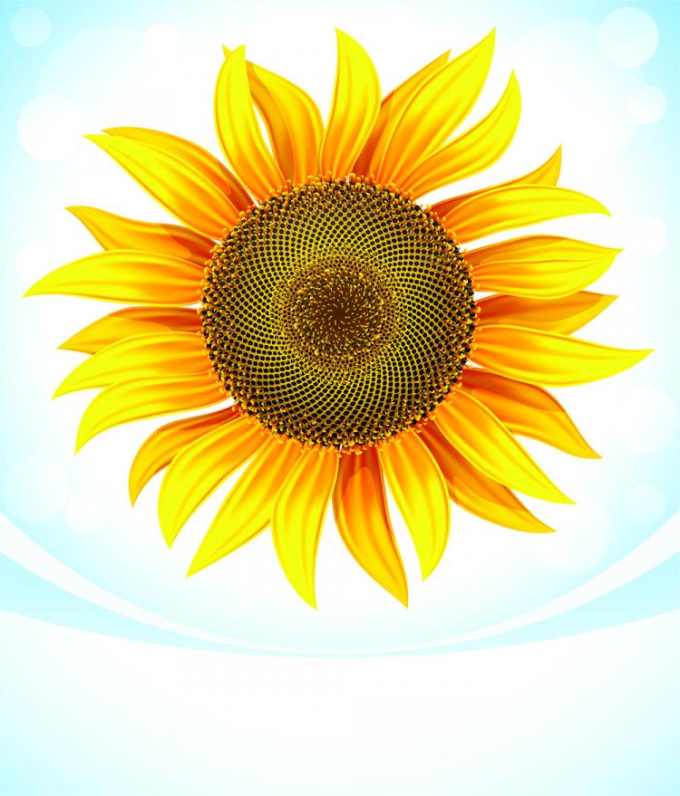 free vector Sunflower 05 vector