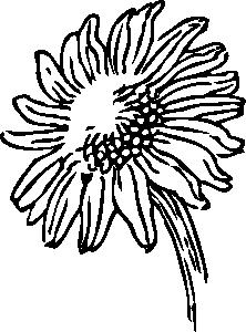 free vector Sunflower clip art