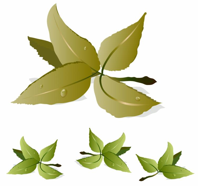free vector Tea leaves